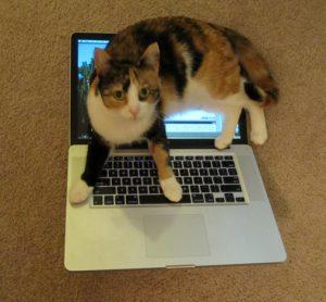 Tortoiseshell over white shorthair cat sitting on an open MacBook Pro laptop